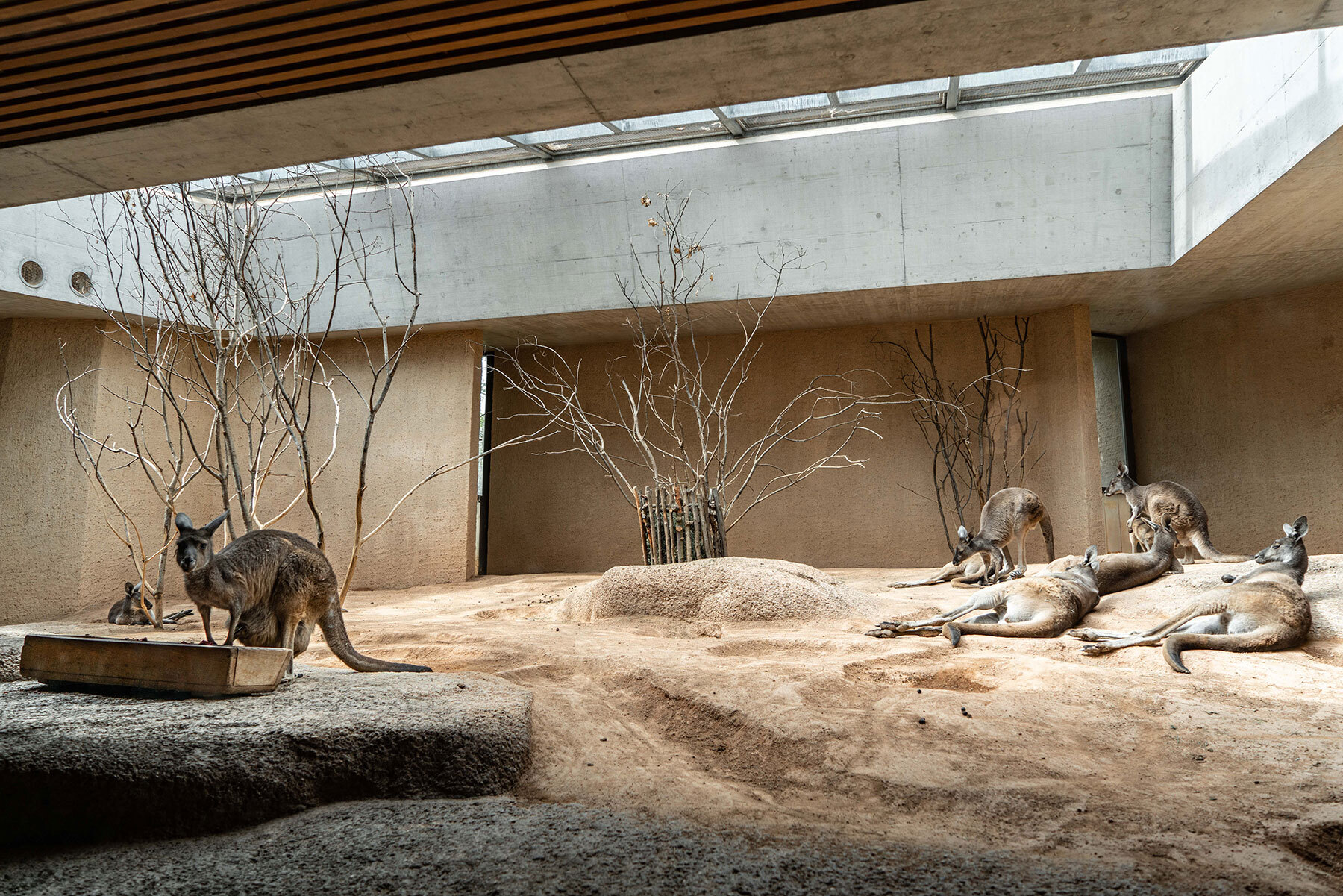 Schweizer Grafik Zoo